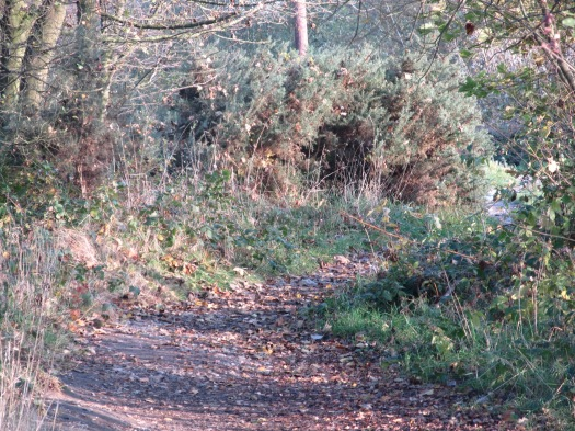 autumn chasewater 1.JPG